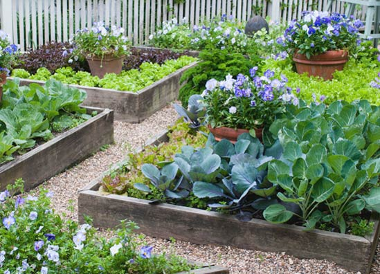 Designing a Raised Vegetable Garden