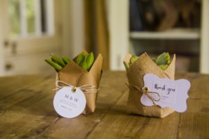 DIY Succulent Wedding Favor